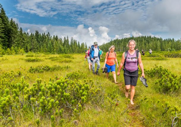 A hike along the moor
