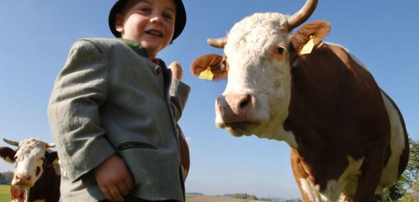 Almabtrieb: Bub mit Kuh