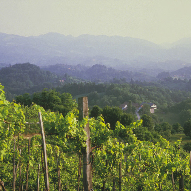 Vinmark i Steiermark